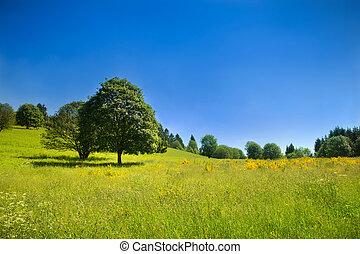 idylliczny, wiejski, krajobraz, z, zielona łąka, i, głęboki, błękitne niebo