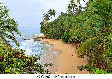 idyllisch, sandstrand, manzanillo, costa rica