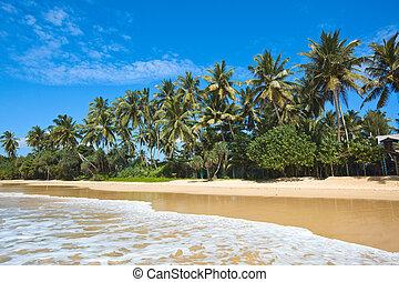 idyllisch, strand., lanka, sri