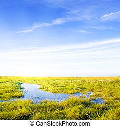 idyllisk, gräsmatta, med, ström, och, solljus