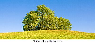 idyllisk, träd, äng