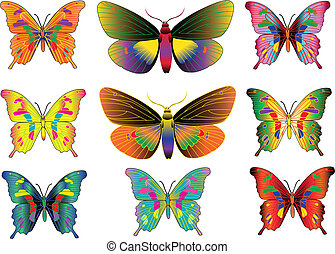 ifferent multicolored butterflies