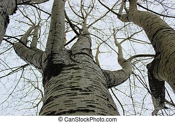 igennem, den, træer