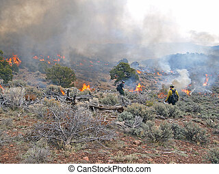 Ignition - Wildland fire fighters use prescribed fire to...