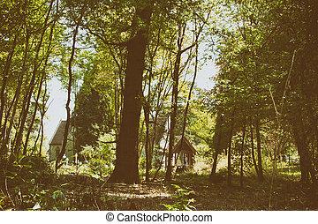 igreja, cercado, por, árvores, em, a, madeiras