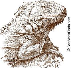 iguana, grabado, ilustración, cabeza