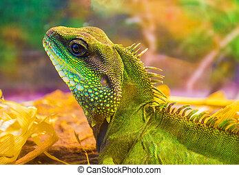 Iguana. Iguana animal wildlife.