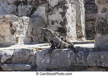 Iguana in Ruins in Tulum, Mexico