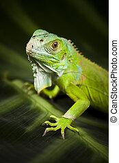 Iguana in the wild, bright colorful vivid theme