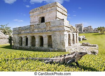 iguana on grass in Tulum mayan ruins in Mexico Quintana Roo