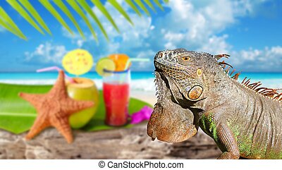 Iguana on Mexico tropical beach cocktail coconut