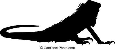 iguana, silueta