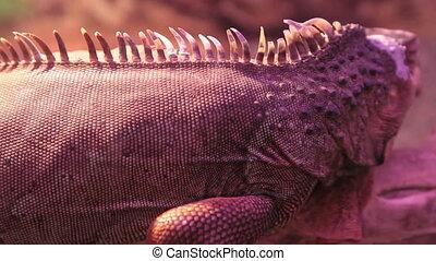 iguana sitting on a log