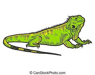 Iguana sketch, drawing a big lizard. Apparel print design color
