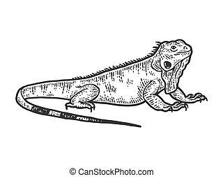 Iguana sketch, drawing a big lizard. Apparel print design.