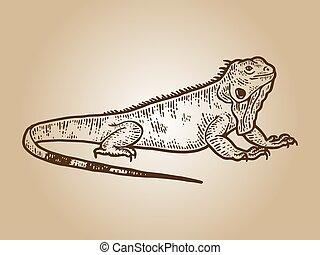 Iguana sketch, drawing a big lizard. Apparel print design sepia
