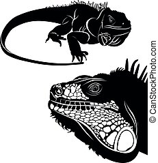 iguane, ensemble, silhouettes, icons., vector., lézard, collection, animal