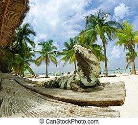 iguane, sur, les, antilles, plage., mexique