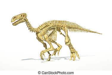 Iguanodon dinosaur full skeleton photo-realistic and scientifically correct, perspective view. On white background with drop shadow and clipping path.