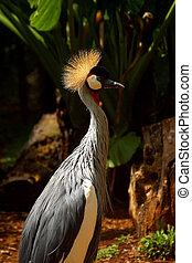 Iguazu Falls - Birds in Iguazu Falls, at the border of...