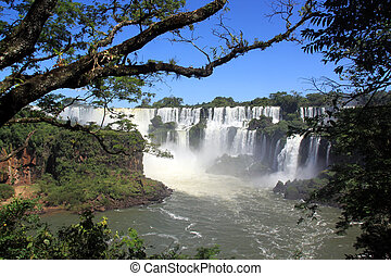 Iguazu - Trees in the forest and Iguazu waterfall in...