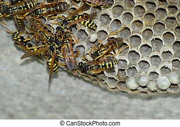 abbildung von larven wespe eier makro nest boden larven makro csp38562671 suche. Black Bedroom Furniture Sets. Home Design Ideas