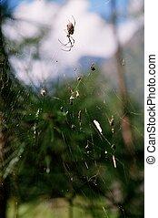 ihr, spinnen , web