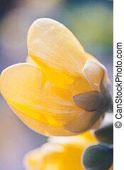 ii, キンポウゲ, 花, 黄色