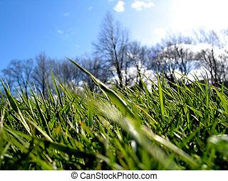 ii, herbe, vert