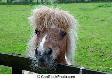 ii, pony