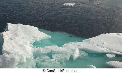 Iicebergs floating in sea around  Greenland.