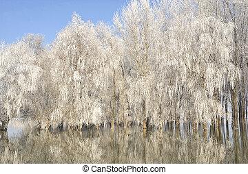 ijzig, bomen, winter
