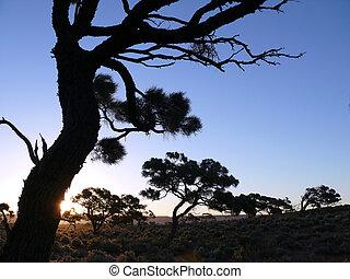 il, asciutto, albero, sullo sfondo, blu, sky.