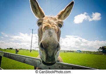 il, ass?, ou, donkey…, amical