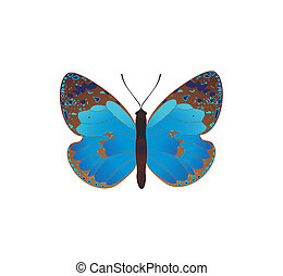 Blu Farfalla Sfondo Bianco Blu Farfalla Illustration Isolato