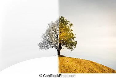 il, cambiamento, fra, seasons., uno, solitario, albero, quello, è, entrambi, inverno, primavera, o, fall.