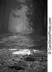 il, nebbia, strada