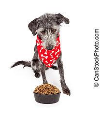 il portare, dall'aspetto, cibo, ciotola, cane, giù, bandana