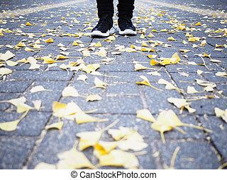 il portare, giù, umano, foglie, scarpa tennis, scarpe, strada, nero, piedi, ginkgo, cadere, standing