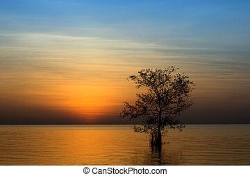 il, silhouette, di, uno, albero, in, uno, lago