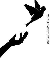 il, uomo, permettere, il, uccello