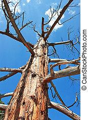 il, vecchio albero