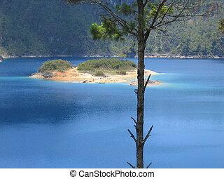 ilha, atrás de, um, árvore, ligado, a, lagoa, lagunas, de,...