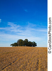 ilha, cheio, de, árvores, meio, campo