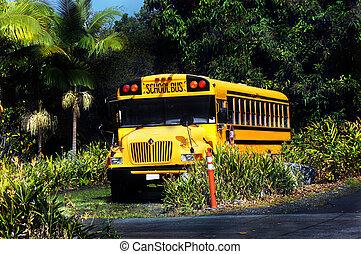 ilha, escola, fim, dia, grande