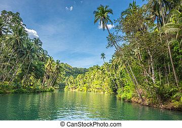 ilha, filipinas, bohol, verde, selva, loboc, rio, vista