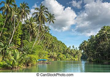 ilha, filipinas, bohol, verde, tradicional, loboc, selva, pescador, barco rio
