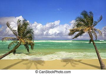 ilha, havaí, kauai, pardise