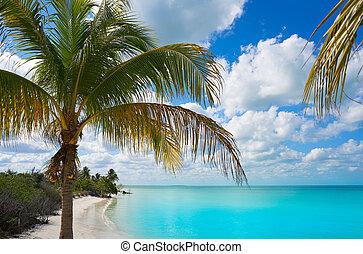 ilha holbox, paraisos , praia, árvore palma, méxico
