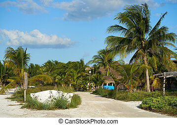 ilha holbox, tropicais, árvore palma, méxico